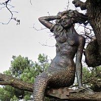Русалка на дереве :: Валерий Дворников