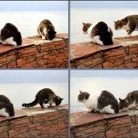 Анапские кошки :: Нина Бутко