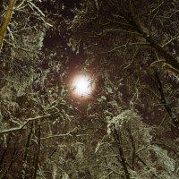 Ночь в лесу :: Евгений Лебедь