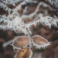 Снежные иголочки :: Маргарита Б.