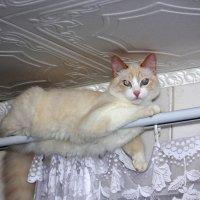 Барсик :: Сергей Кочнев