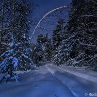 Ночь в сказочном зимнем лесу :: Сергей