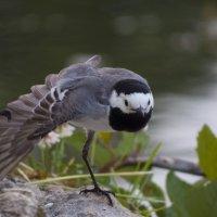 Птичка :: Ксения Репина