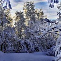 В гостях у Деда Мороза! :: kolin marsh
