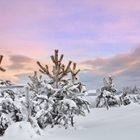 утренние зарисовки зимы... :: Александр
