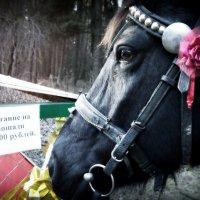 Лошадь-предприниматель :: Валерий Кишилов