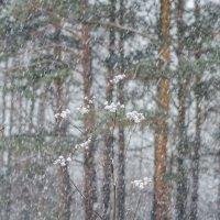 Зимние цветы :: Андрей Щетинин