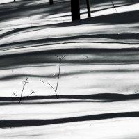 Снежные поляны :: Людмила Синицына