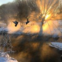 Зима :: Ирина Иванова