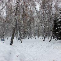 Лес зимой :: раиса Орловская