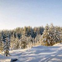 Под снежным покрывалом января :: Виктор Заморков