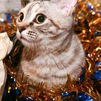 Рождественский подарок :: Dmitriy Predybailo
