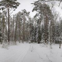 Русский лес :: Mikhail .