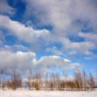 Голубые небеса :: Ольга