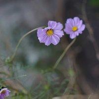 Осенние цветы :: Sony 2 Sony 2