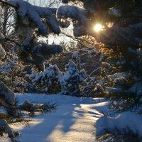 Пришла зима волшебная, как сказка... :: Ольга Русанова (olg-rusanowa2010)
