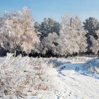 Мороз посеребрил всё вокруг :: Анатолий Иргл