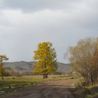 Осень в Хакасии :: MaOla ***