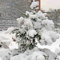 Под снежной шубой :: ivolga