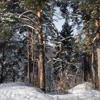Здравствуй, зимушка-зима! :: Владимир Безбородов