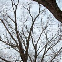 когда деревья были большими :: Тася Тыжфотографиня
