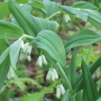 Растение :: Maikl Smit