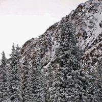 Столик для Красной Шапочки от Серого Волка в Новогоднюю Ночь :: santamoroz