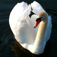 Лебедь в Сормовском парке :: lapin_valerei@mail.ru