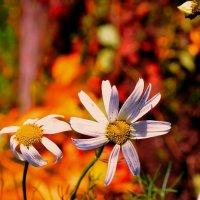 Последние цветы осени :: Любовь