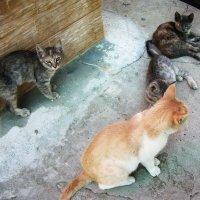 Бездомные кошки :: татьяна