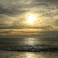 Птичий переполох :: valeriy khlopunov
