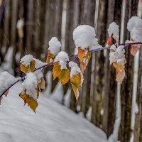 Ах , снег , снежок ... :: Евгений Ананевский