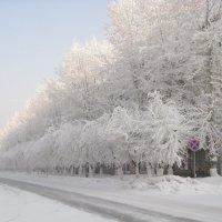Зима. :: Людмила Грибоедова