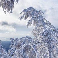 Графика зимы... :: Светлана Игнатьева