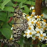 Бабочка :: Валерий Murr