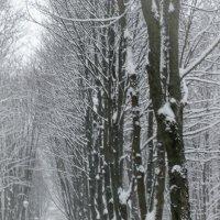 Зимний парк... :: Елена Фролкова