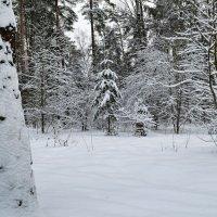 Зимний лес :: Милешкин Владимир Алексеевич