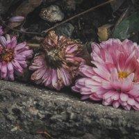 Немного весны в зимнюю стужу :: Маргарита Б.