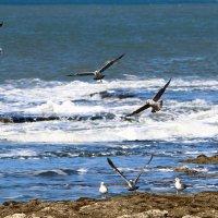 чайки на берегу моря :: vasya-starik Старик