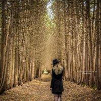 лесной туннель :: Наталья