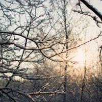 Маленький лес :: Михаил