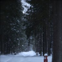 Просека :: Сергей КАЗАКОВ
