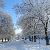Сибирская зима :: Alla Swan
