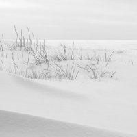 Финский залив. Комарово. Январь :: Виктор | Индеец Острие Бревна