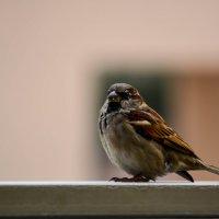 Bird :: Мария Цечоева