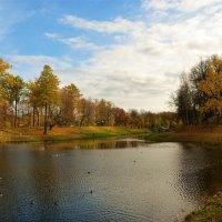 Утиные радости на Карпином пруду... :: Sergey Gordoff