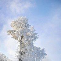 На севере диком... :: Игорь Суханов