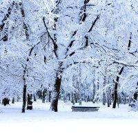 Снег укрыл. :: Сергей Касимов