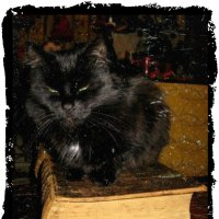 Старый кот на старой книге :: Натали Пам