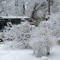 Был такой снегопад :: Татьяна Смоляниченко